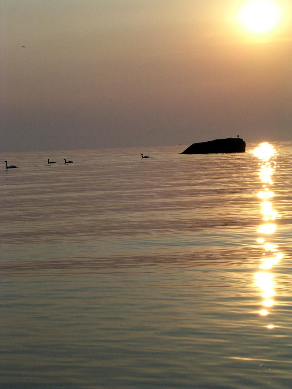 Les cygnes au lever du soleil