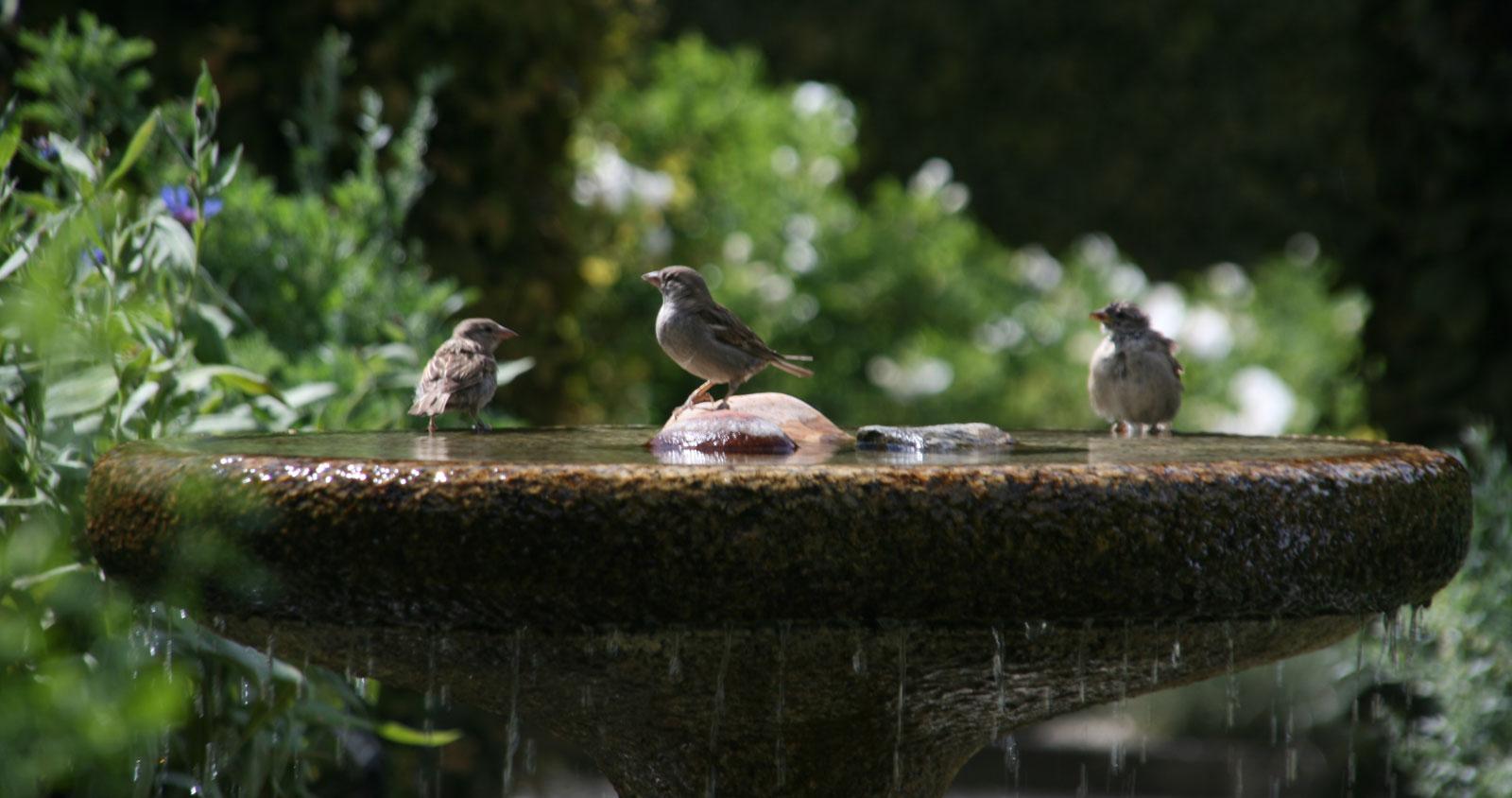 Jardin des Cinq Sens à Yvoire : le bain des oiseaux.